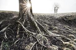 drevo in sonce 2 copy 3.jpg