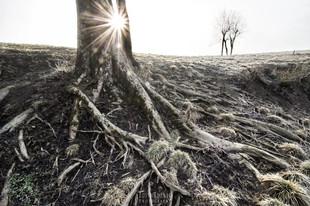Bojan Rupnik Photography, pokrajinska fotografija: Drevo, sonce in Planinsko polje
