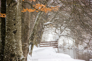 Bojan Rupnik Photography, pokrajinska fotografija: grajski park