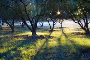 Bojan Rupnik Photography, pokrajinska fotografija: Oljke na Kamenjaku