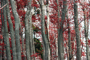Bojan Rupnik Photography, pokrajinska fotografija: jesenski gozd in Slivnica