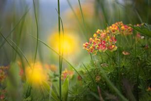 Spomladansko cvetje