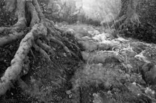 Bojan Rupnik Photography, črnobela fotografija: Škratovka in Haasberg