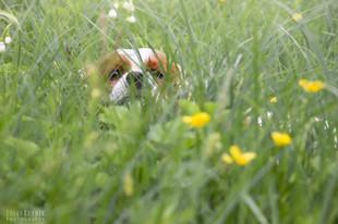 Bojan Rupnik Photography, Fotografija psov in drugih živali