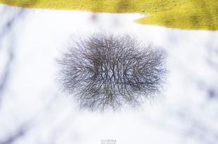Bojan Rupnik Photography, pokrajinska fotografija: grm in Planinsko polje