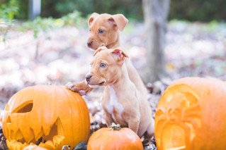Pup's and Pumpkins!