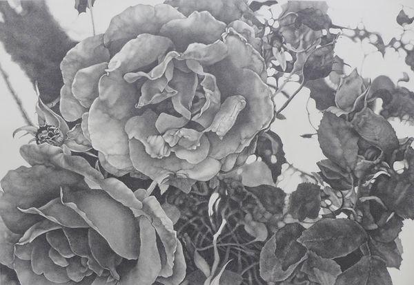 Roser_Folder 68x100 cm