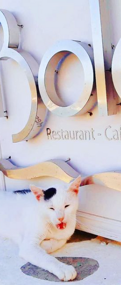 Bola Restaurant All Day Bar