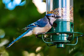 You Might Be Asked To Remove Your Bird Feeder
