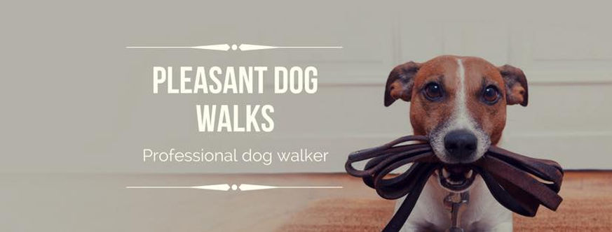 Dog walker in Penarth