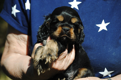 # 8 blk and tan male