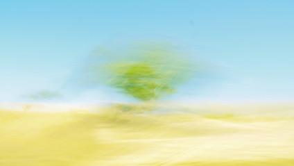 Texas Desert Tree