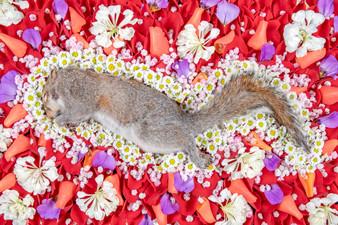Squirrel flowers