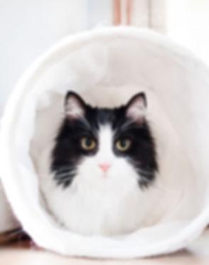 cat-main.jpg