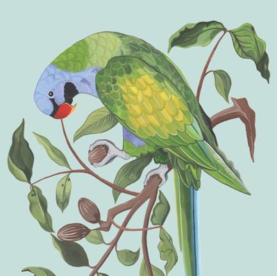 Derbyan Parrot in Gouache