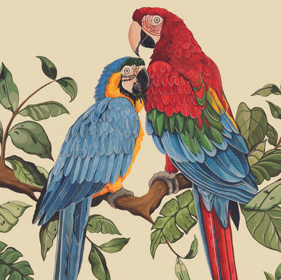 Macaws in Gouache