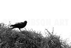 PAcific Coast highway Bird Watching