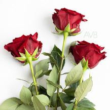 Two Dozen Long Stem Roses