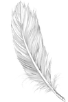 PikPng.com_feather-png_576910.png