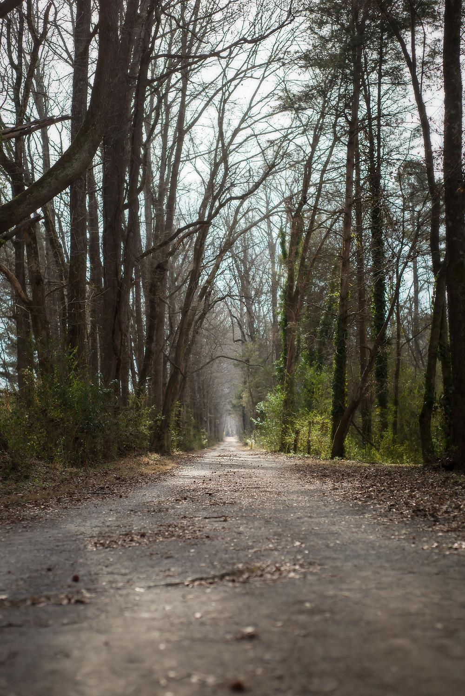 Rock Creek Park | Albemarle NC | Landscape Photography | Jennifer Ann Photography