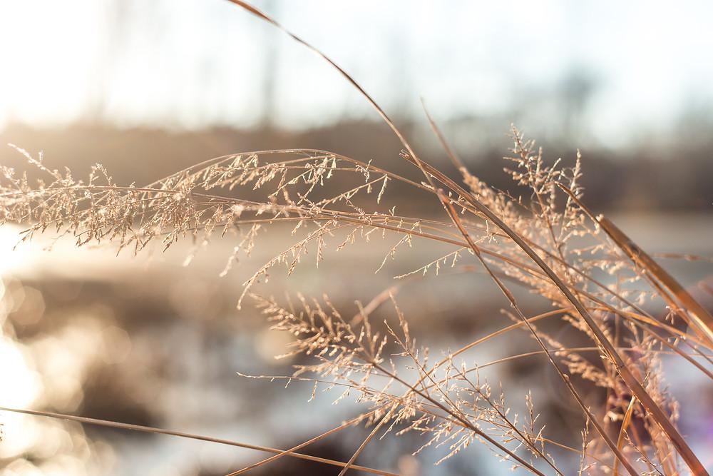 City Lake Park | Albemarle NC | Landscape Photography | Jennifer Ann Photography