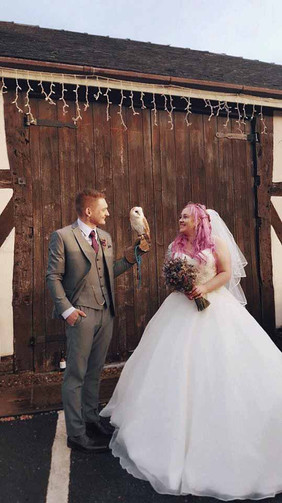 Our ring delivery owls are quite settled during the wedding