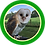 Thumbnail: An Hour with Owls