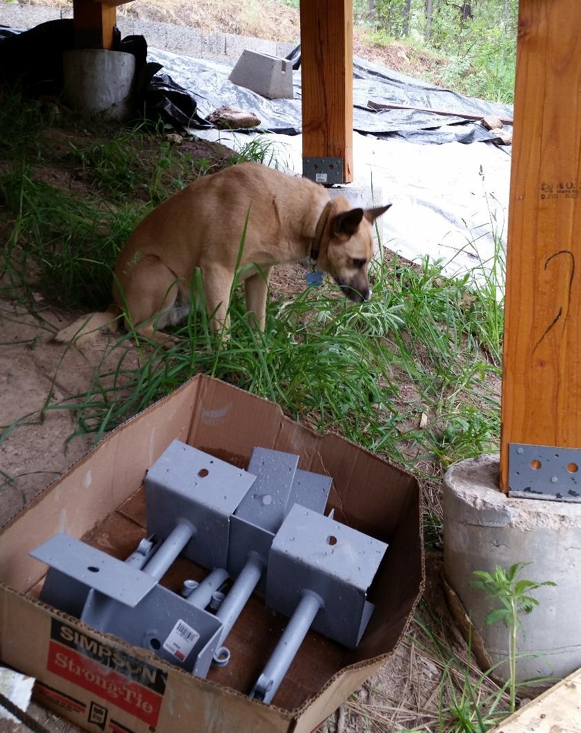 Maile supervises deck building