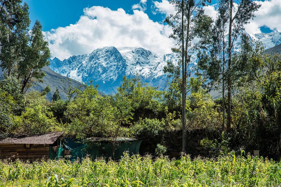 Destileria paisaje.jpg