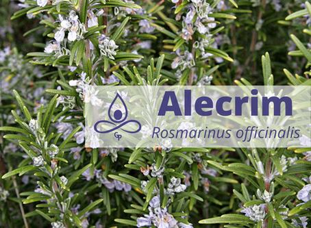 Alecrim - Energizador e iluminador de consciência e pensar