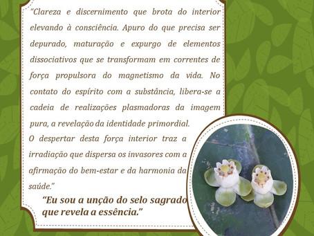 Andiroba – Depuração profunda