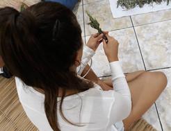 Vivencia_erva_defumação-9.jpg