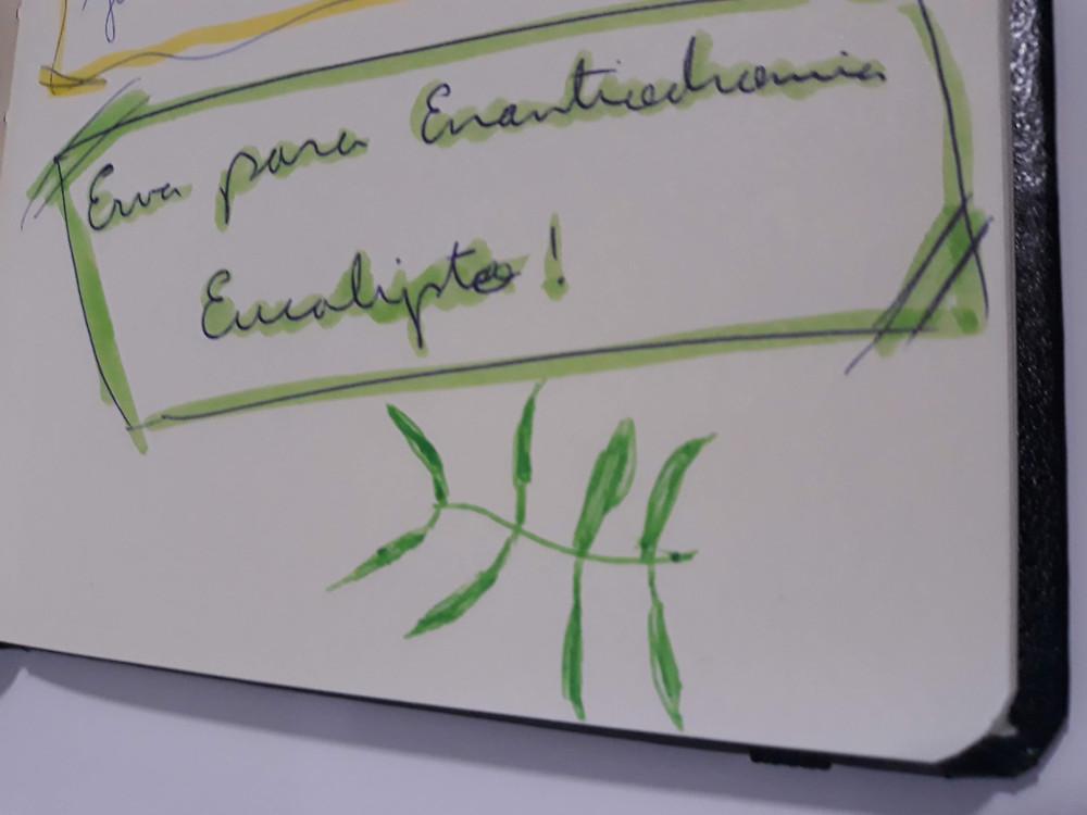 Anotação de rodapé durante a aula - quando as ervas surgem