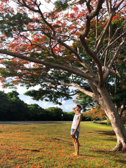 Hobi tree