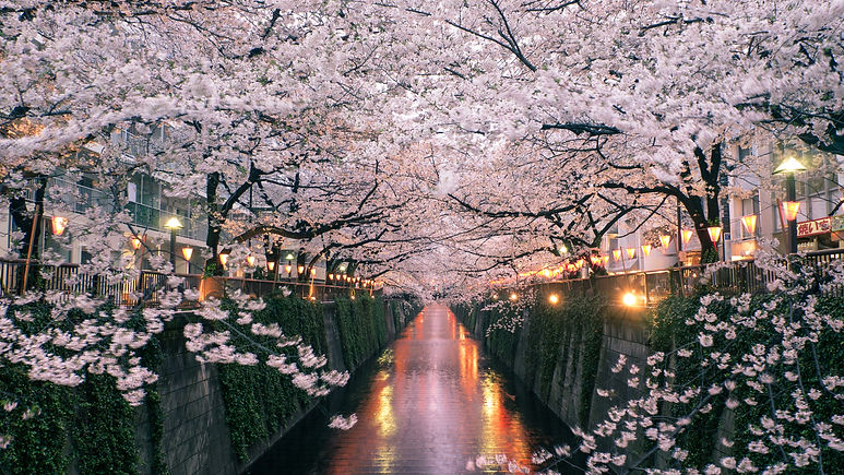 Japan_Cherry-Blossoms_GettyImages-179989