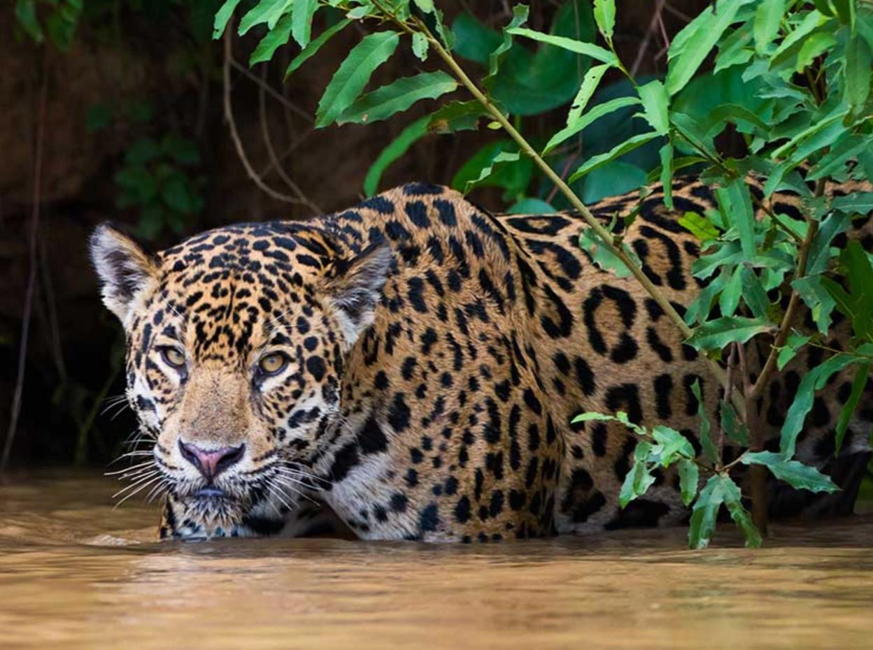 Brazil: The Amazon, Pantanal & Iguazu Falls