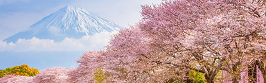 cherry-blossoms-in-japan-hero-copy.jpg