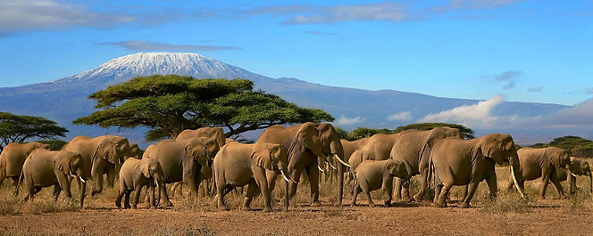 Kilimanjaro-hiking-elephants-scaled_edit