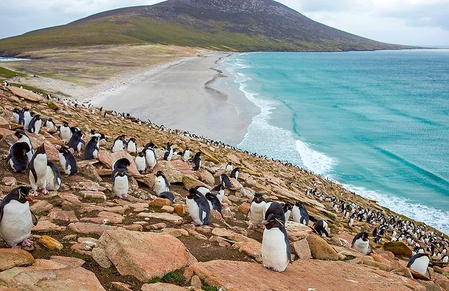 Rockhopper_Falklands-2689a5ab6a6c.jpg