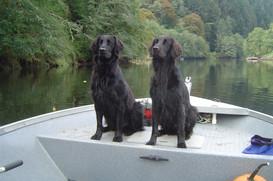 Fishin' Dogs
