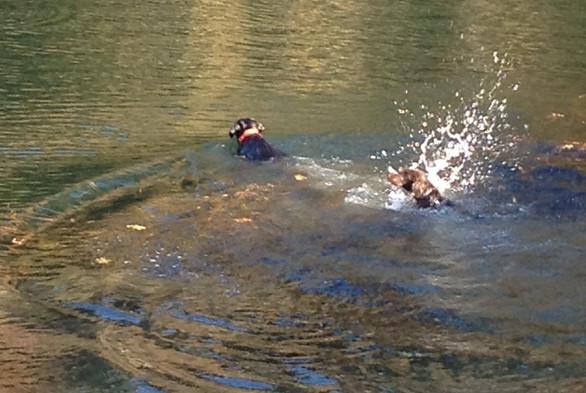 Della's first swim