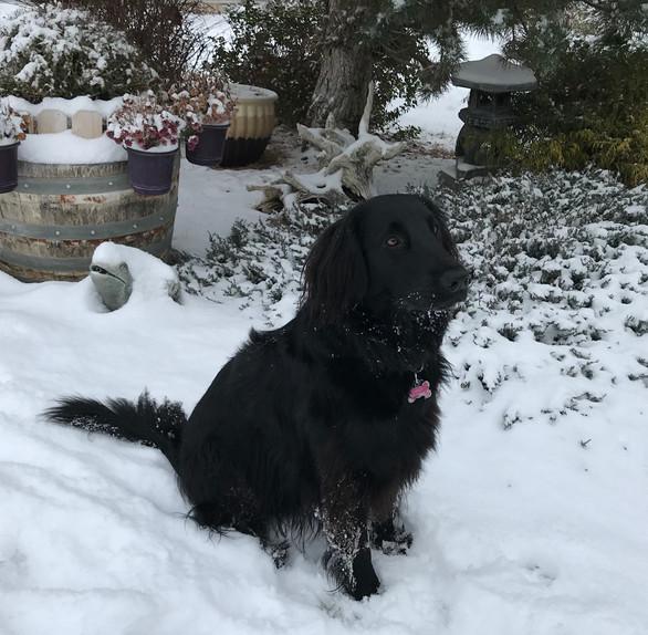 A Christmas Treat for Heidi