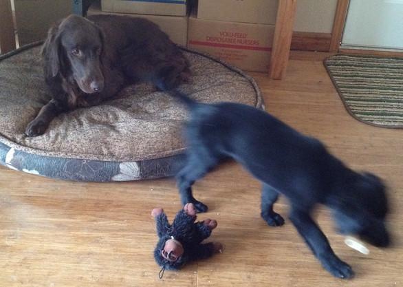 Elle tries to pick up bone