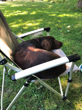 Guinness takes a nap