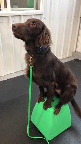 Guinness Graduates from Obedience.