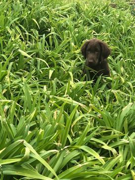 Grindel hiding in grass