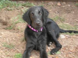 Morgan as a puppy