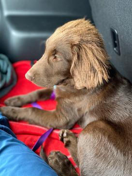 Islay settles in car