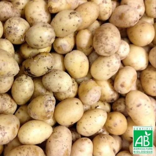 1 kg pdt Agatha bio (frite potage purée )