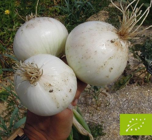 oignons blanc bio (500g)
